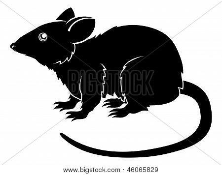Stylised Rat Illustration