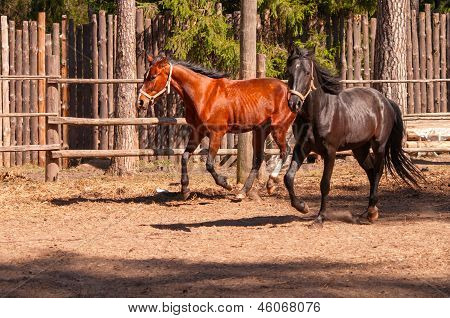 Two Galloping Horses