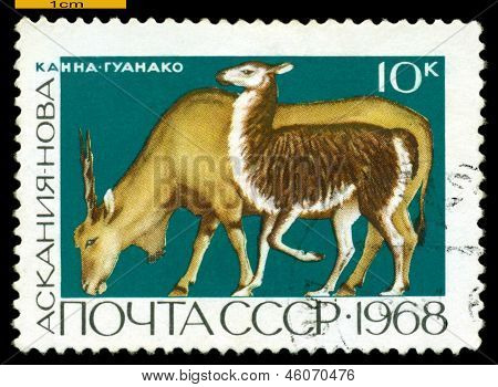 Vintage  Postage Stamp. Eland And Guanaco.