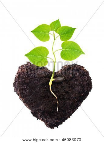 Plant tree in ground heart shape with root.