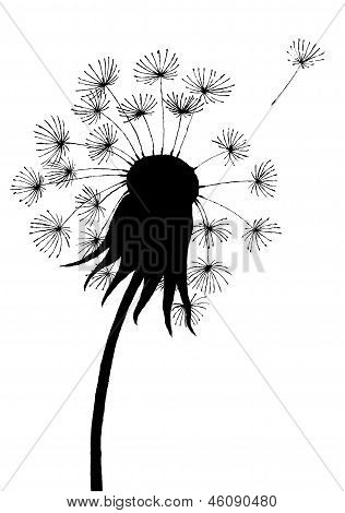 Dandelion Black and White