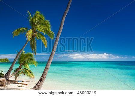 Palmeras colgando sobre la desierta playa tropical