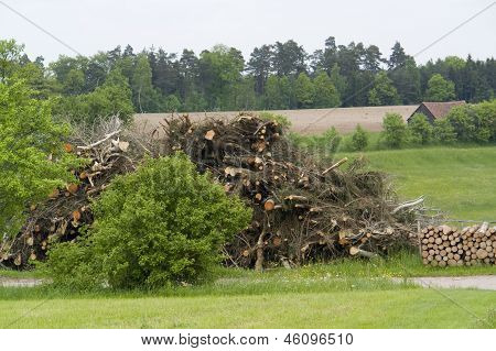 Firewood Pile In Rural Ambiance
