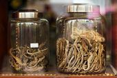 Dried seahorse in Chinese drugstore, Chinatown, Bangkok