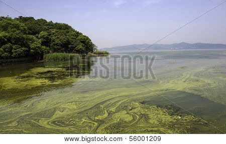 Polluted Water Of Taihu Lake