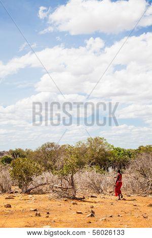 Masai In Savanna