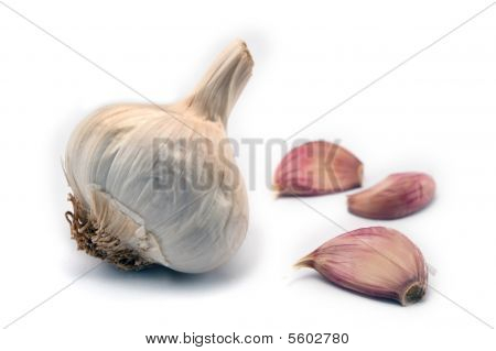 Bulb of Garlic and galic cloves