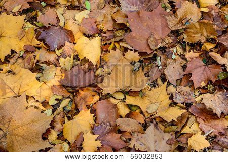 Dried leaves background