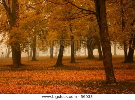 Misty Autumn Morning 2