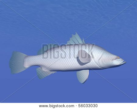 Barramundi fish underwater - 3D render