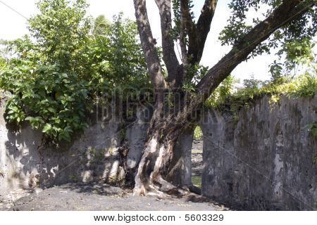 Tree growing inside of distroyed building