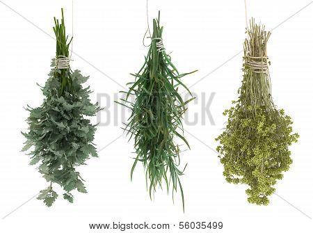estragon, parsley, sagebrush, tarragon