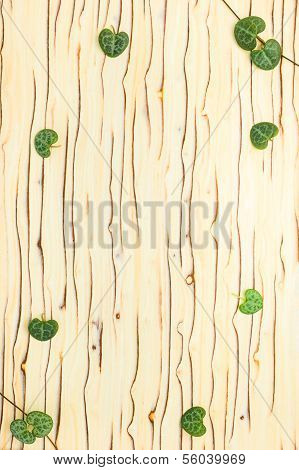 Leaves Ceropegia Woodii On Wooden Texture, `ice Tree`