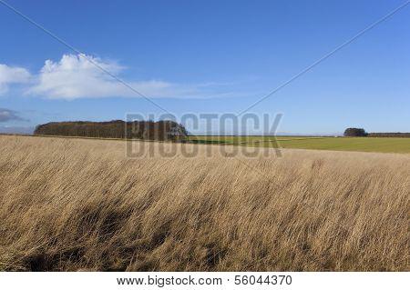 Grass Sky And Woodlands