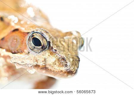 Portrait of frog