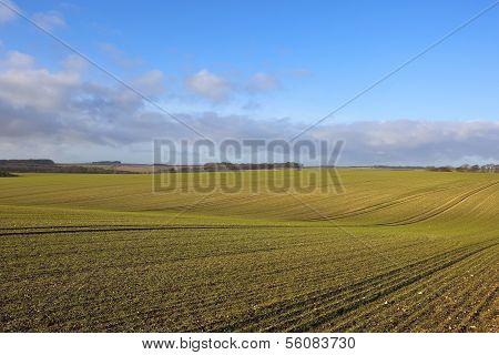 Seedling Cereal Crops