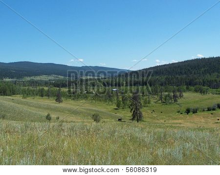 Cattle in the ranch lands