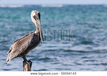 Pelican On A Pylon