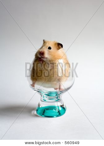 Hamster In The Glass