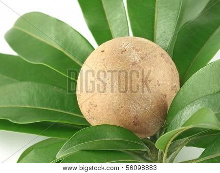 Sapodilla Or Sapota Fruits With Green Leaves