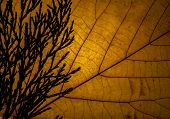 pic of transpiration  - detail of a yellow autumn leaf in backlight - JPG