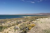pic of pampa  - Lake in the pampas of Patagonia - JPG
