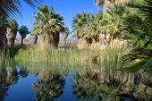 stock photo of oasis  - Oasis in the desert with palms trees reflected in water - JPG