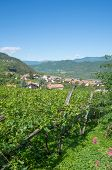foto of south tyrol  - famous Wine Village of Tramin at south tyrolean Wine Route - JPG