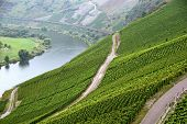 stock photo of moselle  - Agricultural landscape with vineyards in Moselle valley in Germany in fall - JPG