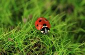Beautiful ladybird on green moss, close up