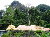 Sleeping Golden Buddha Lying In The Jungle