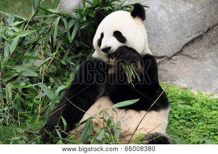 cute panda in Hong Kong