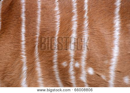 Textured Of Nyala Fur