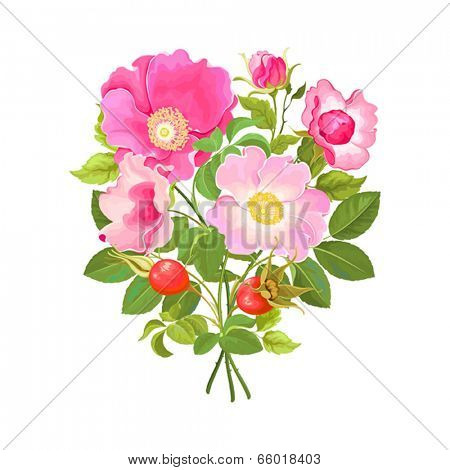 Bouquet of flowers and rose hips, vector illustration.