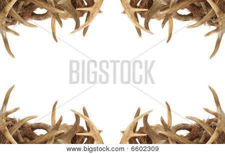 Deer Antler fronteira