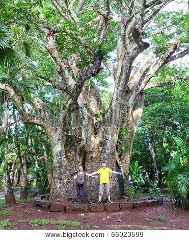 Tourists near a large baobab. Mauritius.