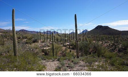 Scenic Inside The Arizona-sonora Desert Museum
