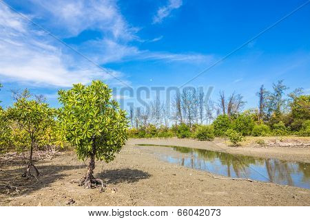 Mangrove Trees And Roots On The Beach Of The Sea