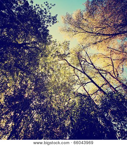 a wide shot of tree tops and the sky toned with a vintage instagram like filter