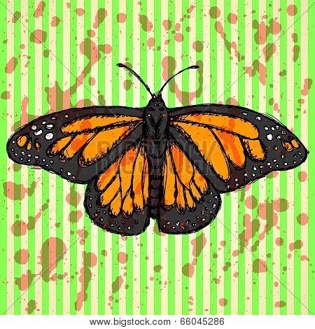 Sketch Butterfly, Vector Vintage Background