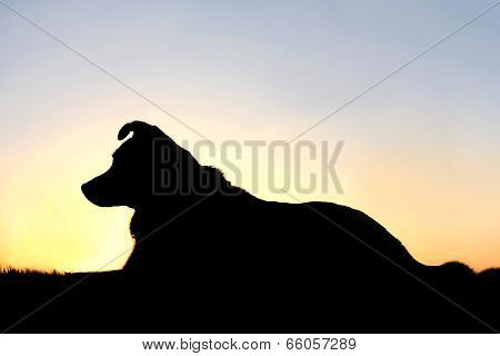 Silhouette Of German Shepherd Mix Dog At Sunset
