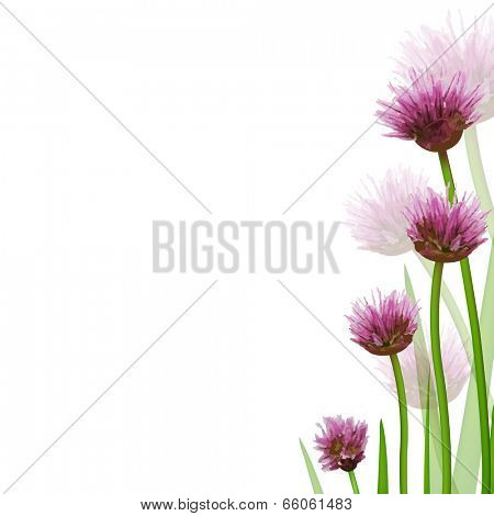 Flower Border, Isolated On White Background, Vector Illustration