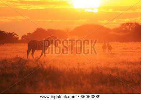 Zebra - African Wildlife Background - Sunset Golden Harmony and Freedom