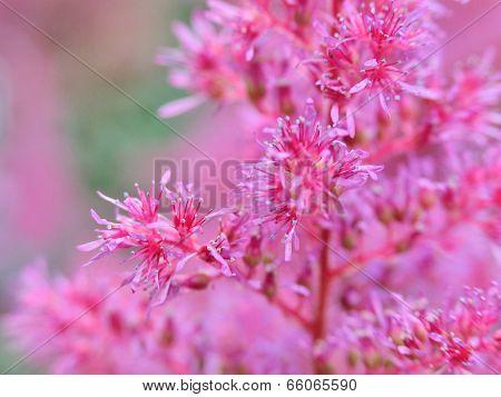 Rose garden grass