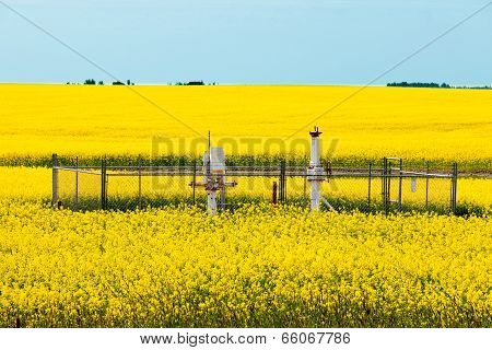Natural Gas Wellheads Canola Agricultural Farmland