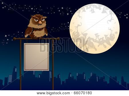 Owl Sit On Blank Sign