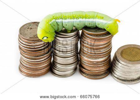 Green Caterpillar Climbing On Thai Coins, Money Concept.