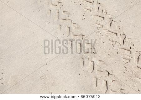 Atv Tracks On The White Sand Beach. Closeup Photo