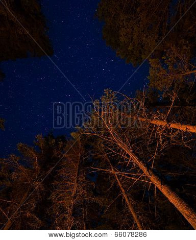 Trees And Stars Above A Campfire