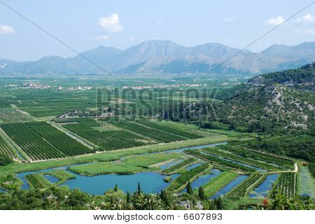 Neretva River Delta In Croatia